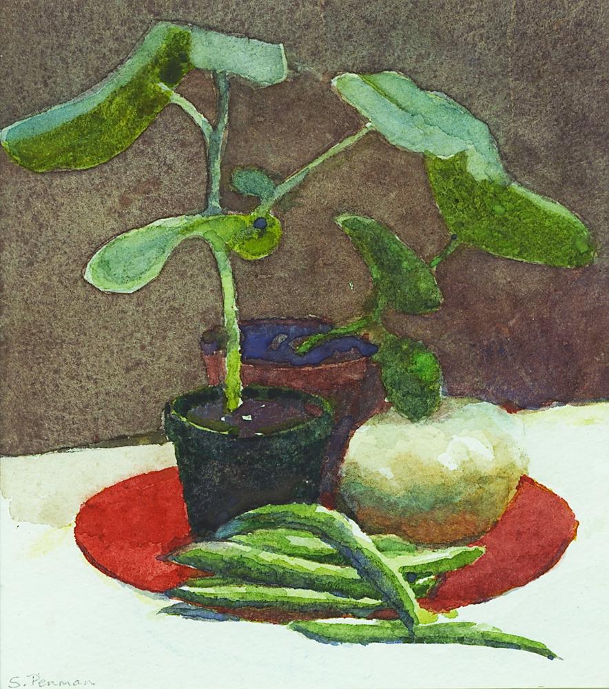 Squash plants, squash & beans ll